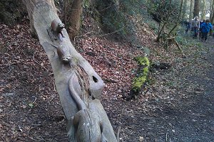 Woodland Carvings
